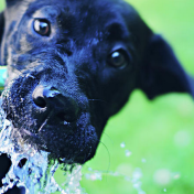 Is reverse osmosis water good for dogs